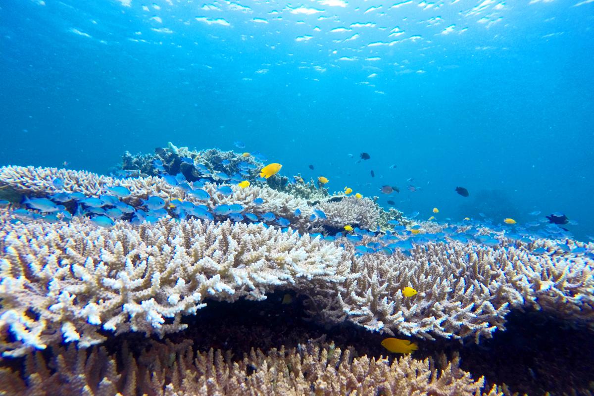モアルボアルのサンゴ礁