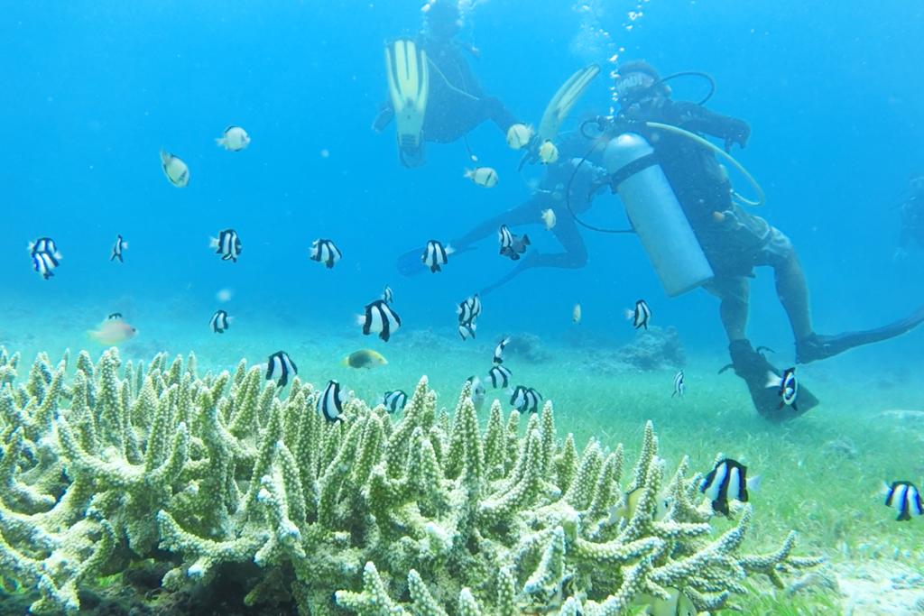 マクタン島のサンゴと熱帯魚
